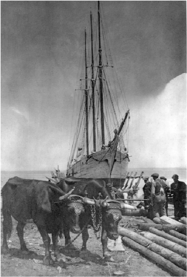 ship-meteghan-inspiration-oxen
